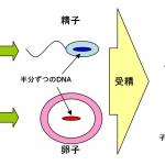 DNA_iden
